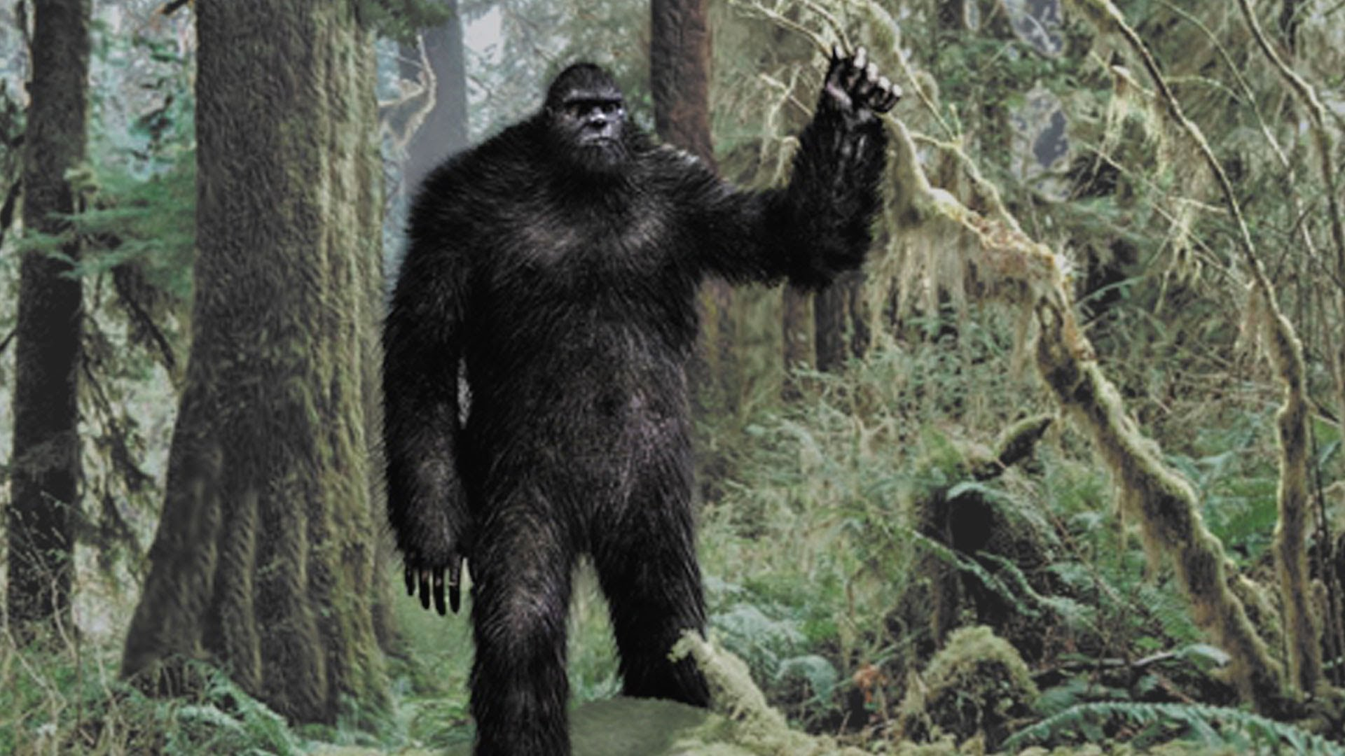 Unit 158 Woman Sees \'Bigfoot\', Sues California for Not Believing Her